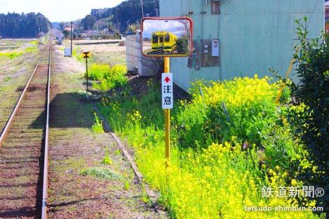 いすみ鉄道沿線の菜の花